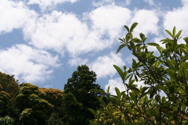 Early Summer Blue Sky