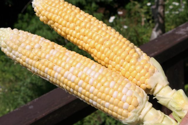 First Fruits Sweetcorn