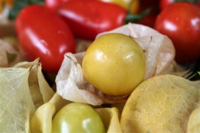 Ground Cherry, The Super Food