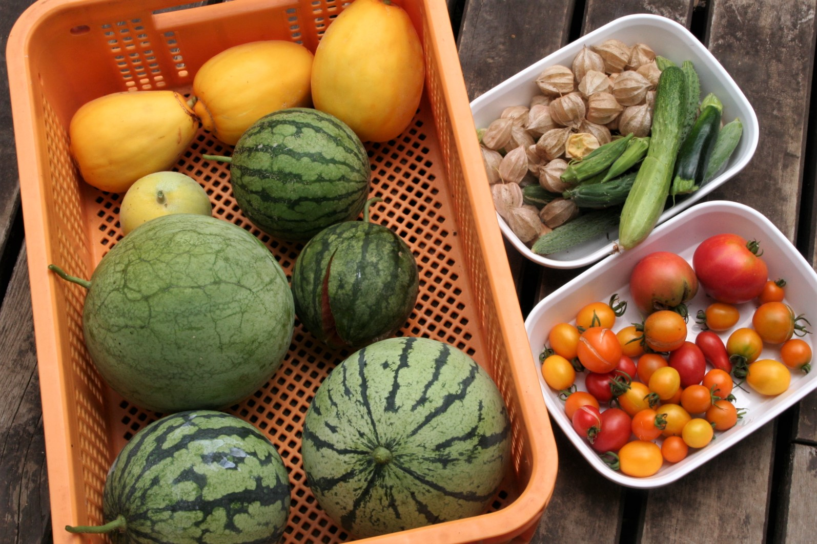 Cucurbits and Solanum