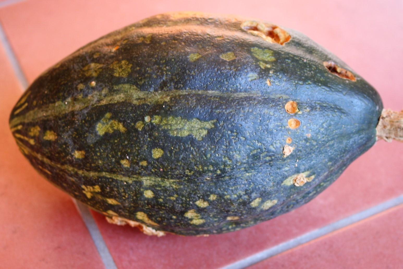 Worm-Eaten Pumpkin